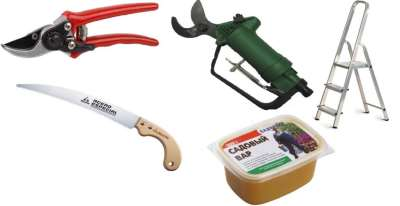 Обрезка растений, правила обрезки и необходимые инструменты