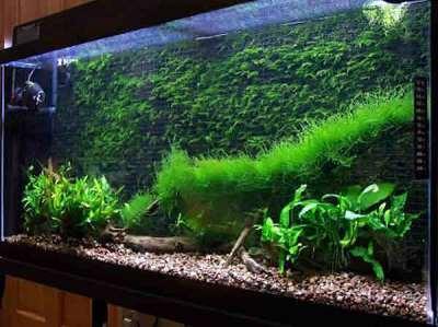 Что следует учитывать при оформлении аквариума