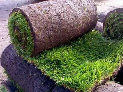 Профессиональная укладка рулонного газона «под ключ»