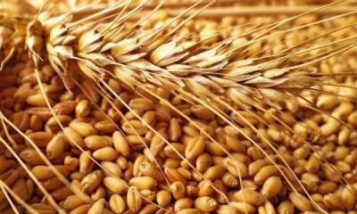 Покупка и продажа сельскохозяйственных товаров