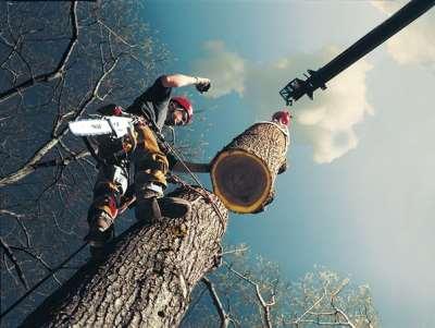 Какие деревья можно удалять на своем участке без штрафа