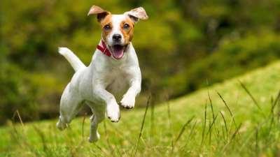Как обезопасить свою собаку от укусов клещей?