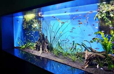 Кок создать дизайн аквариума