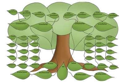 Польза от составления родословного древа