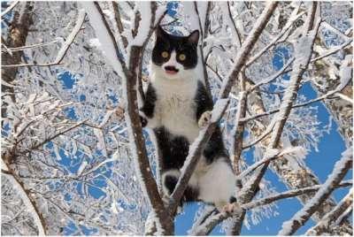 Услуга съема кошек с дерева от «Crazy Alp»