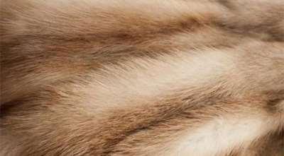 Шкурки куницы – качество и ценность