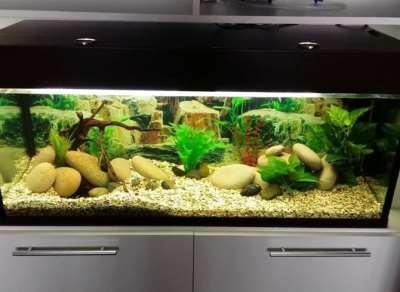 Покупка аквариума: на чем основывать выбор?