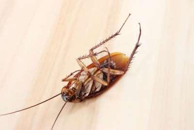 Принципы современной травли тараканов