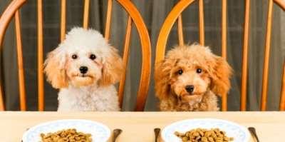 Выбор корма для собак с учетом возраста